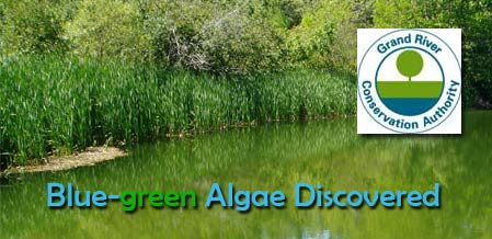Swimmers Fall lLL - Health Precautions Urged  At Local Reservoir Due To Presence Of Blue-green Algae