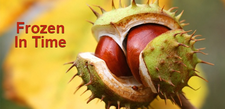 More And More Chestnut Trees Appearing In Ontario